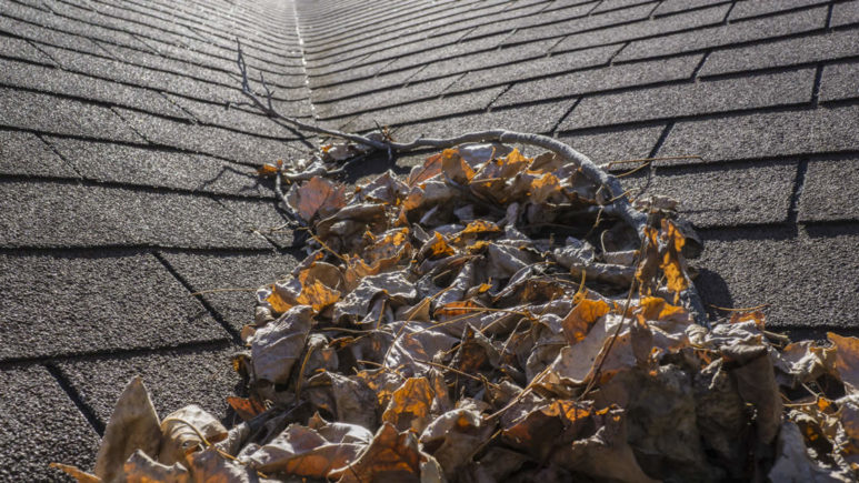 Should You Clean Your Home's Roof Shingles?